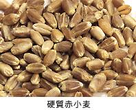 画像:硬質赤小麦